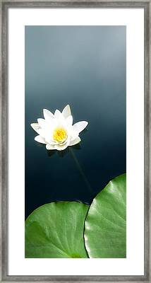 Water Lily Study 2 Framed Print by Ron Regalado