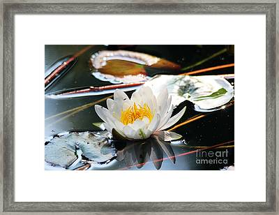 Framed Print featuring the photograph Water Lily by Trina  Ansel