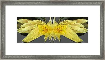 Water Lily Unleashed 4 Framed Print by Tim Allen