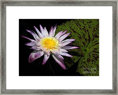 Water Lily With Lots Of Petals Framed Print by Sabrina L Ryan