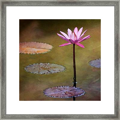 Water Lily Wonderland Framed Print