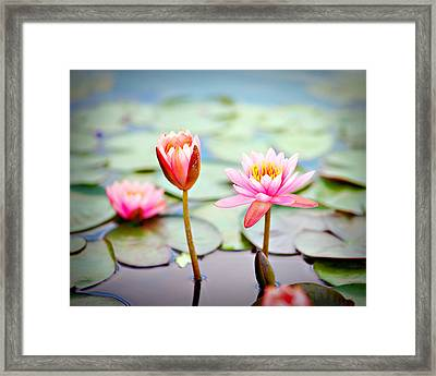 Water Lily's II Framed Print by Tammy Smith