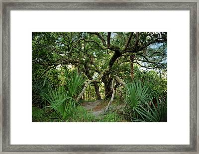 Water Oak. Three Lakes W.m.a. Framed Print