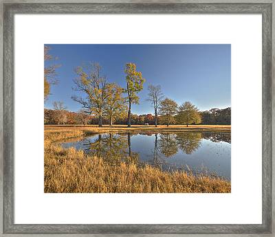 Water Oaks Pond Framed Print
