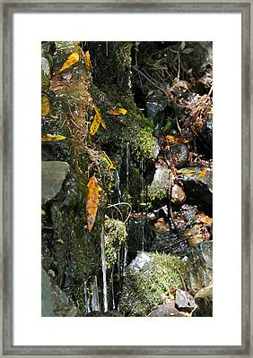 Framed Print featuring the photograph Water Of Life by Michele Myers
