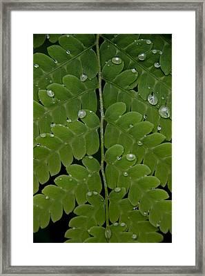 Water On Fern  Framed Print