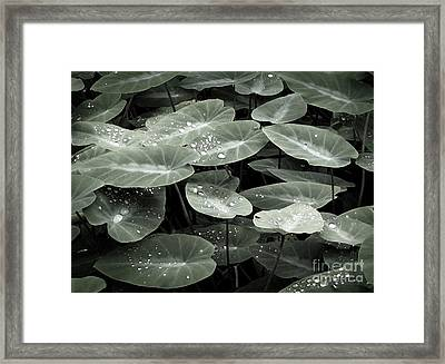 Framed Print featuring the photograph Water On Ivy by Ellen Cotton