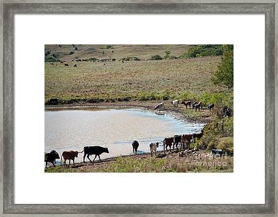 Water Parade Framed Print by Fred Lassmann