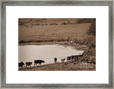 Water Parade Sepia Framed Print by Fred Lassmann
