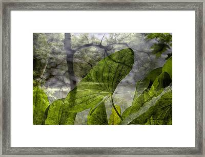 Water Plant Early Morning Merged Image Framed Print by Thomas Woolworth