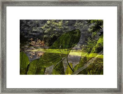 Water Plant With Bird Merged Image Framed Print