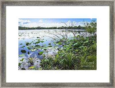 Water Plants And Their Landscape Framed Print by Ellie Teramoto