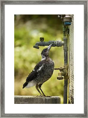 Water Please 01 Framed Print by Kevin Chippindall