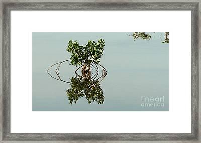 Water Pond  Framed Print by Javier Correa