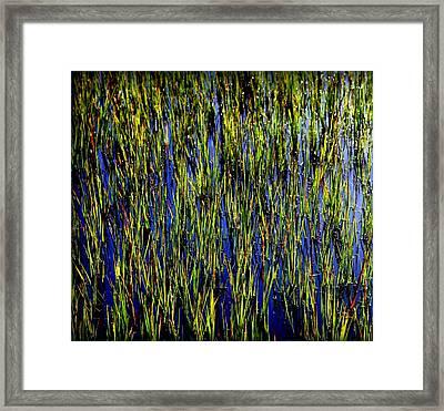 Water Reeds Framed Print by Karen Wiles