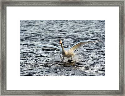 Water Skiing Framed Print by Michal Boubin