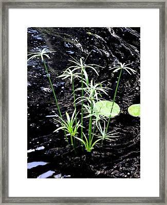 Water Sparklers Framed Print by Deborah  Crew-Johnson