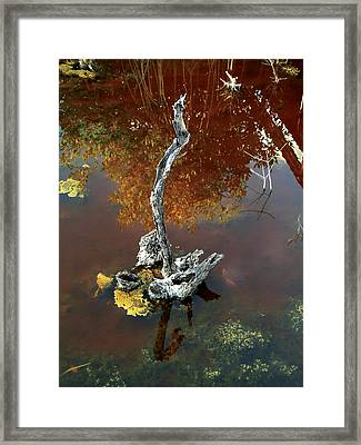 Water Stick Framed Print by Mike Feraco