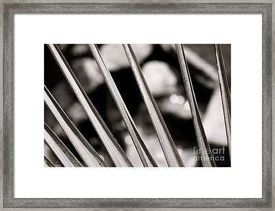 Water View Framed Print by Paul Cammarata