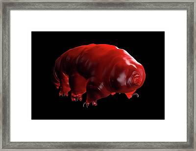 Waterbear Framed Print by Science Artwork