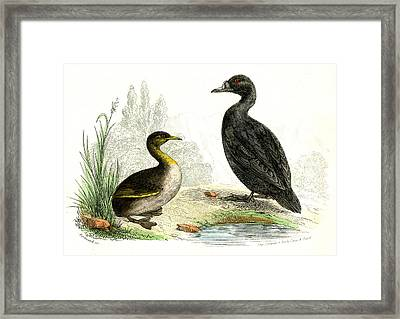 Waterbirds Framed Print by Collection Abecasis