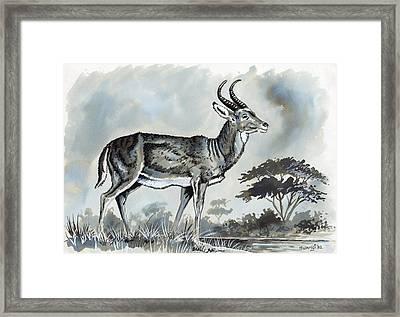Waterbuck Framed Print by Anthony Mwangi