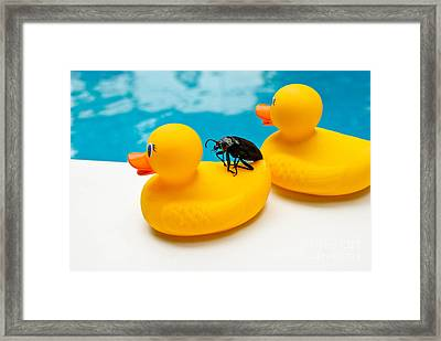 Waterbug Takes Yellow Taxi Framed Print by Amy Cicconi