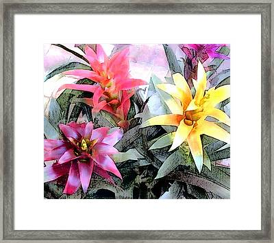 Watercolor And Ink Sketch Of Colorful Bromeliads Framed Print