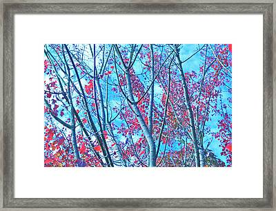 Framed Print featuring the photograph Watercolor Autumn Trees by Tikvah's Hope