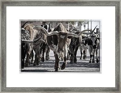 Watercolor Longhorns Framed Print by Joan Carroll