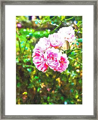 Watercolor Of Pink Fairy Roses In Nature Framed Print by Ammar Mas-oo-di