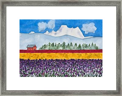 Watercolor Painting Landscape Of Skagit Valley Tulip Fields Art Framed Print