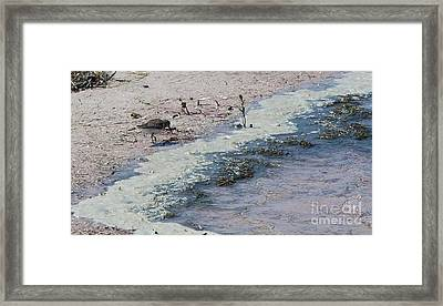 Watercolor Sandpipers Framed Print