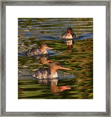 Watercolors In Nature 5 Framed Print by Fraida Gutovich