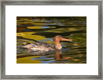 Watercolors In Nature 6 Framed Print by Fraida Gutovich
