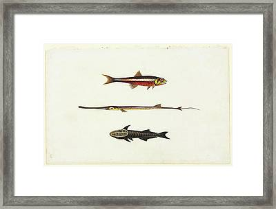 Watercolour 58 From Watling Collection Framed Print by Natural History Museum, London