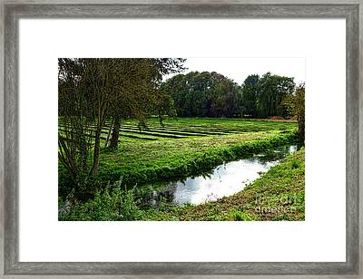 Watercress Field Framed Print by Olivier Le Queinec