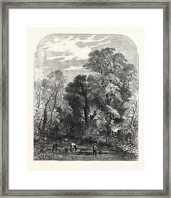 Watercress-gathering Framed Print
