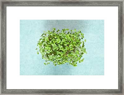 Watercress Framed Print