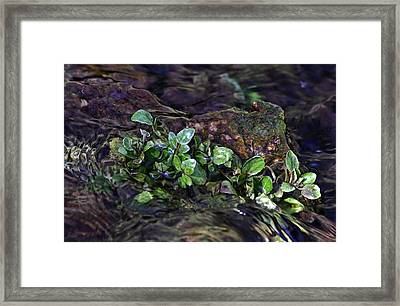 Watercress Wet And Wild Framed Print by Leda Robertson