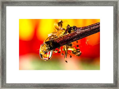 Waterdrop Refraction  Framed Print by Bruce Pritchett