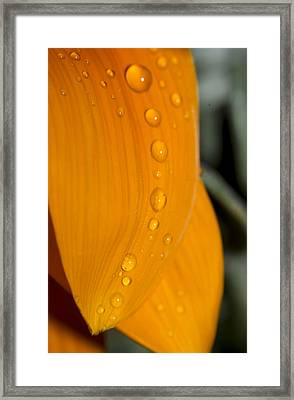 Waterdrops Framed Print by Amr Miqdadi