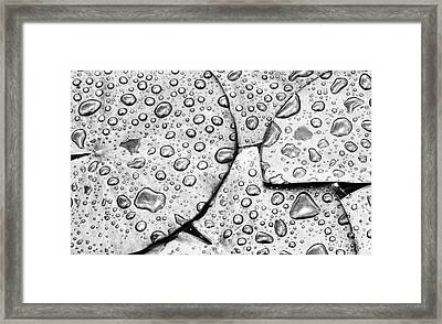 Waterdrops And Lilypads Framed Print by Tim Gainey