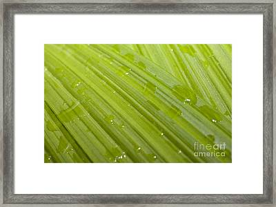 Waterdrops On A Leaf Framed Print by Jonathan Welch
