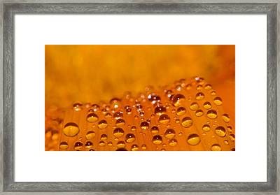 Waterdrops2 Framed Print by Amr Miqdadi
