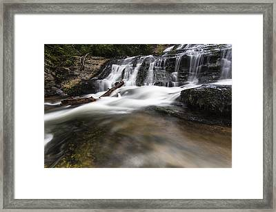 Watered Log Framed Print by Bill Cantey