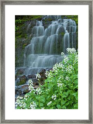 Waterfall And White Wildflowers Framed Print