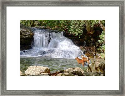 Waterfall Dogs Framed Print by Bob Jackson