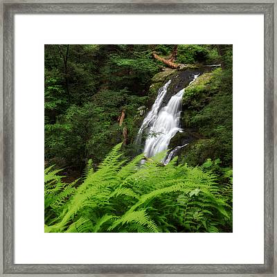 Waterfall Fern Square Framed Print by Bill Wakeley