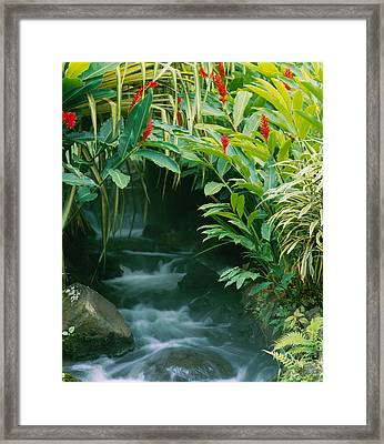 Waterfall In A Forest, Tabacon, Costa Framed Print by Panoramic Images